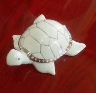 Костенурка порцеланова